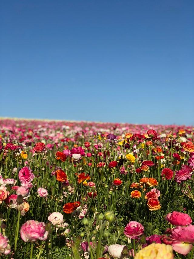 field of flowers goddess flora